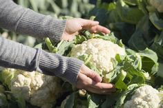 Cauliflower/Spinach Balls 7 Recipes for $7 -- Each! | AndersonCooper.com