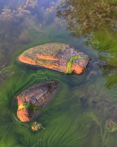 Turtle, Berlin, Oceans, Photography, Animals, Inspiration, Animales, Tortoise, Biblical Inspiration