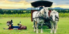 Carriage Drives in Plettenbergbaai | Plett | Fun Activity - Dirty Boots