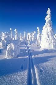 Kuvia Kuusamosta ja Rukalta. fanpop.com Snowy Pictures, Finland Travel, Lapland Finland, Lappland, Snow Scenes, Winter Wonderland, Scenery, Places To Visit, Landscape
