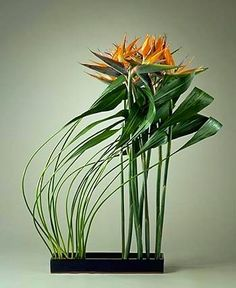 "larbre-flower: "" Just liked this Pin: Ikebana Japanese flower arrangement http:& "" Ikebana Arrangements, Ikebana Flower Arrangement, Modern Flower Arrangements, Art Floral, Deco Floral, Floral Design, Flower Show, Flower Art, Cactus Flower"