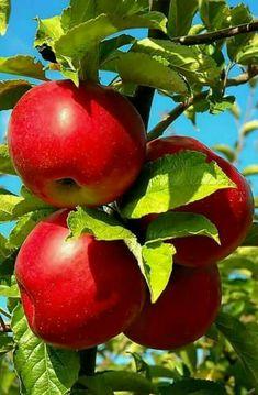 Frutas climaticas yahoo dating