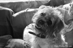 Rocky - part pug, part schnauzer, part lhasa apso - adorable face!