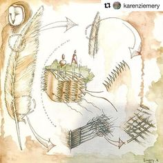 #Repost from Architecture student @karenziemery who is deeply interested in Biomimicry.  I am voting for mimicking an Owl's feather structure for our next noise cancelation building skins.... HOW DOES NATURE DO IT ?! #asudesignschool #biomimicry #design #asuarchitecture #architecture #nature
