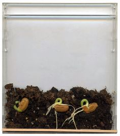 Proyectos de arte para niños: Semillas en una caja de CD