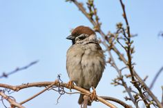 Darwin, Animal Kingdom, Wordpress, Birds, Contemporary, Blog, Animals, Animales, Animaux