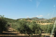 Spain, Iznajar - Andalucian country side