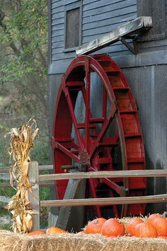 love the pumpkins displayed in front of the water wheel