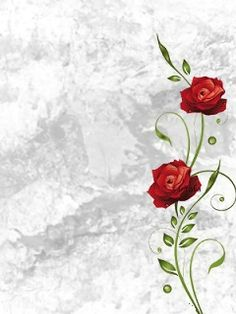 Download 240x320 «rose» Cell Phone Wallpaper. Category: Nature