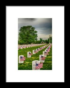 Veterans Salute Framed Print By Mary Timman