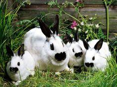 vlinder konijnen
