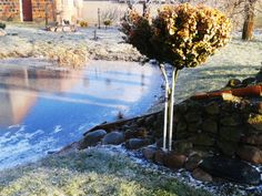 #garden #winter #ice #january
