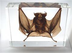 Large Lucite Bat!  WANT!
