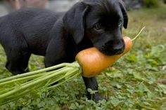 Top 10 Best Things You Should Give Your Dog To Eat ~ The Pet's Smarty