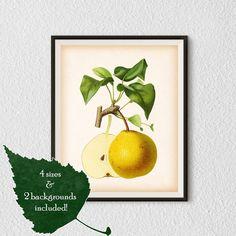 Fruit print Pear art Kitchen art Pear by RestoredBotanicalArt