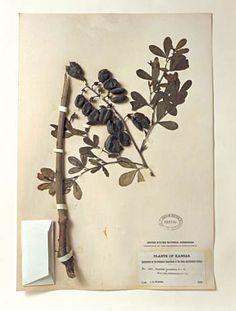prairie specimens via terry evans photography