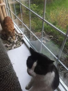 My cats with a raccoon.