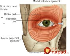 Ideal Eye Posture: Relaxing the Lower Eyelid and Strengthening the Upper Eyelid I have become convinced that the way people hold their lower eyelid strongly affects their emotional wellbeing. The lower eyelid has the ability to remain tonically tense. Facial Muscles Anatomy, Muscle Anatomy, Body Proportions, Body Spa, Anatomy Tutorial, Muscular, Anatomy And Physiology, Anatomy Reference, Head And Neck