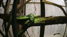 Heute im Krefelder Zoo aufgenommen. Wirkte als ob Sie bemerkte :-)