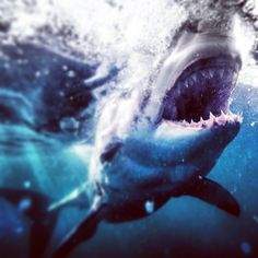 """A Photographer Puts You Face-to-Face With Sharks, by Swimming Uncaged 