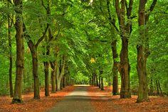 Grunewald- forest located in southwestern Berlin, in the Charlottenburg-Wilmersdorf district.