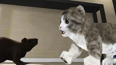 Cat Simulator 3D - virtual pet - little kitten fun gameplay for kids 201...