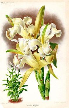 Старинные иллюстрации из справочников по ботанике