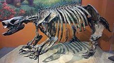 Paramylodon skeleton in San Diego. Paramylodonis an extinct genus ofground slothof the family Mylodontidaeendemic to North Americaduring thePliocenethrough Pleistoceneepochs, living from around ~4.9 Mya–11,000 years ago.