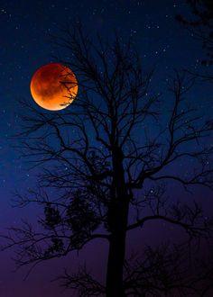 The Darkest Night ~ Ray Majoran