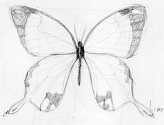 Butterfly Sketch style for Becky?