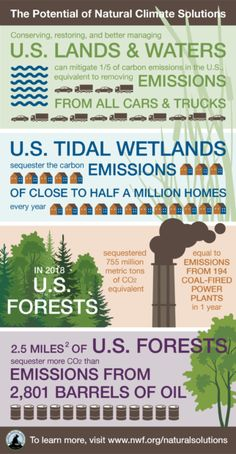 How Nature Can Help Fight Climate Change • The National Wildlife Federation Blog : The National Wildlife Federation Blog Climate Change Policy, Carbon Sequestration, Natural Ecosystem, Agricultural Land, Storm Surge, Experiential Learning, Greenhouse Gases, Ecology, Conservation