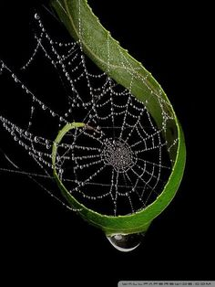 Raindrops_on_Spider_web - wallpaper-480x640