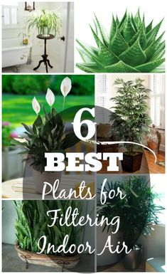 Indoor / 6 Best Plants for Filtering Indoor Air! | Healthy Food Mind. Click the pic for more info...