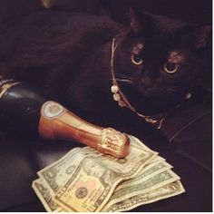 Cash moggy: These fancy feline likes to lounge back with money, jewelry, and champagne Rich Kids Of Instagram, Cats Of Instagram, Make Money Online, How To Make Money, Legitimate Online Jobs, The Knack, Funny Cats, Cat Lovers, Cool Photos