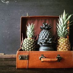 Tonight on the blog, we are discussing legends in the form of sea captains and pineapples and how the two came to be connected with the art of hospitality. It is symbolism of the sweetest kind, detailing the story behind a design aesthetic that has been visible all over the coastal U.S. for the past three centuries. You might be as surprised as us to learn how it all got started! -- -- -- #pineapples #history #nautical #legends #sailors #seastories #maritime #fruit