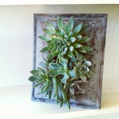 succulent vertical garden frame | Add it to your favorites to revisit it later.