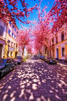 Cherry Brick Road, Bonn, Germany