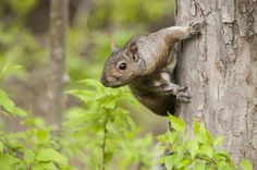 Grey Squirrels Can Also Have Other Colors