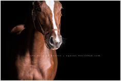 Houston,TX Equine Photographer