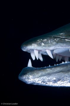 Barracuda.  Quite the toothy fish,watch out!!!