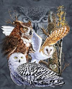 """Owls Of The  World Cross Stitch Pattern***L@@K***YOUR FINISHED PATTERN SIZE. 238 Stitches x 280 Stitches 17.0"""" X 20.0"""" ON (14 COUNT) AIDA CLOTH. ~~ I SEND WORLD-WIDE ~~Free"""