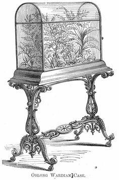 / wardian case / cabinet of curiosities /