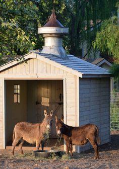 15 European Modern Farmhouse Decor Secrets I Learned from Patina Farm Barnyard Animals, Zoo Animals, Horse Shelter, Animal Shelter, Patina Farm, Small Barns, Mini Donkey, Miniature Donkey, Goat Barn