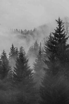 Black and White nature forest mist Woods fog foggy pines bleak livalskare Image Beautiful, Beautiful World, Beautiful Places, Beautiful Pictures, Foggy Forest, Pine Forest, Snow Forest, Misty Forest, Forest Road