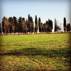 #trees #garden #grass #green #shadow #walking #country #nature #life #instanature #wildness #amazing #joy #smile #novellaorchidea #novella #orchidea #follow #raccontierotici #racconti #ebook