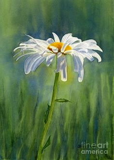 Sharon Freeman's Pacific Northwest Watercolors Sweet single daisy watercolor painting. Shasta Daisy Flower With Blue Green Background by Sharon Freeman - Shasta Daisy Flower With Blue Green Background Painting - Shasta Daisy Flower With Blue Green Back Watercolor Landscape, Watercolor Flowers, Landscape Paintings, Watercolor Paintings, Watercolor Paper, Watercolours, Simple Watercolor, Drawing Flowers, Landscape Art