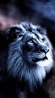 "ღ ""Jehová es mi fortaleza y mi escudo; En él confió mi corazón, y fui ayudado, Por lo que se gozó mi corazón, Y con mi cántico le alabaré."" Salmos 28:7 ღ"
