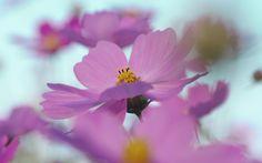 FLOWERS MACRO  | Flowers macro 11 | HD Wallpapers