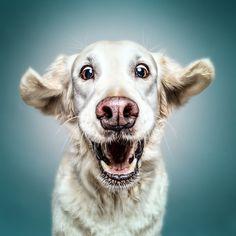 Sam - Hunde können lächeln und lachen - ob sie aber über uns Menschen lachen, ist das Geheimnis der Hunde (Oliver Jobes)!  Worüber wohl der entzückende Sam lacht? Das kann uns wohl nur seine Frauchen beantworten ;o).   Es war uns eine wahre Freude, so einen tollen Seelenschatz und so einen lieben Menschen kennenlernen zu dürfen! Sam und Rita ihr beide wart phantastisch!