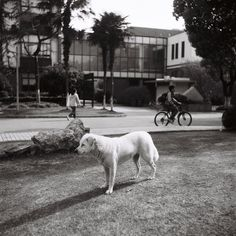 at Tongji University in April, by Zhang Hao 120 Film, University, Dogs, Photos, Animals, Pictures, Animales, Animaux, Pet Dogs